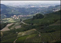 langhe picture, piemonte vineyards